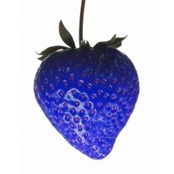 """Sementes de Morango Azul """"African Blue"""""""