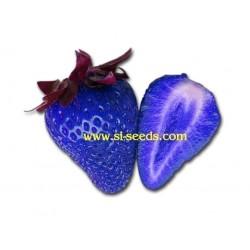 """Semi di Fragola Blu """"African Blue"""""""