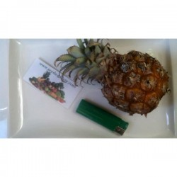 Ananas nanus 'Miniature Pineapple' Seeds