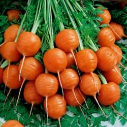 """Carrot Seeds """"Parisian -..."""
