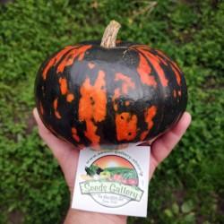 Black Hokkaido pumpkin Seeds