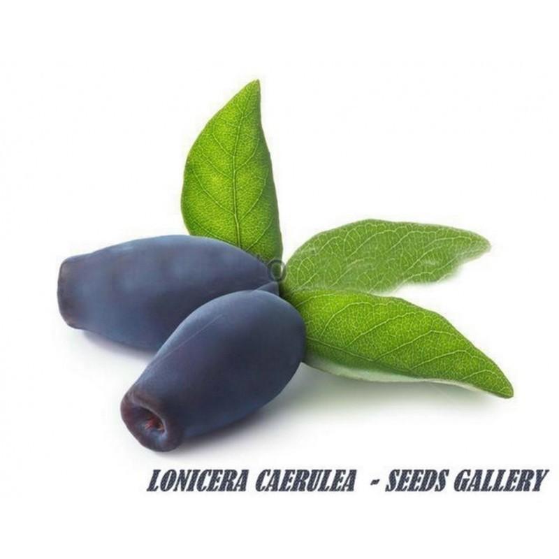 Sweetberry Honeysuckle Seeds Hardy -40C (Lonicera caerulea) 2.5 - 6