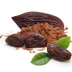 Semi di Cacao (Theobroma cacao)