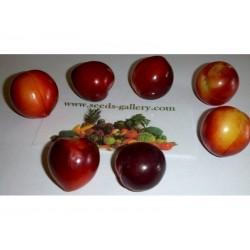 Džanarika Sljiva Seme (Prunus cerasifera)