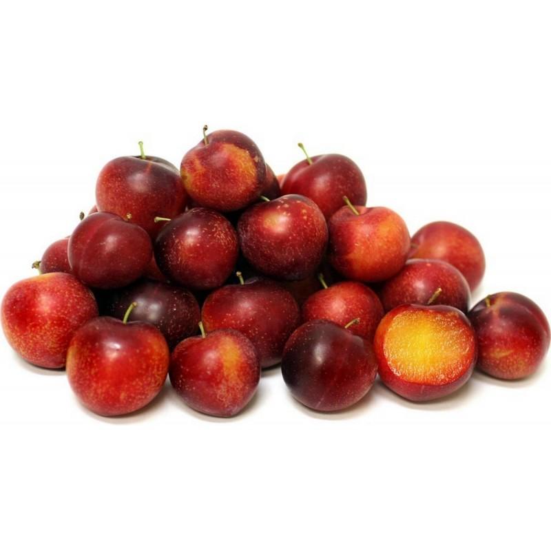 Cherry Plum Seeds (Prunus cerasifera)