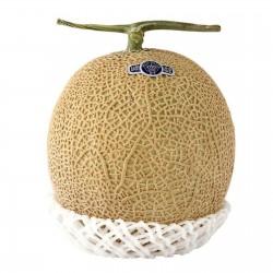 Shizuoka Crown Melon Seeds