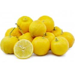 Palestinian sweet lime...