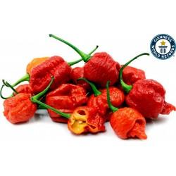 Semi di Peperoncino Carolina Reaper rosso e giallo 2.45 - 1