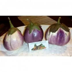 """Aubergine – Eggplant Seeds """"Rosa Bianca"""""""