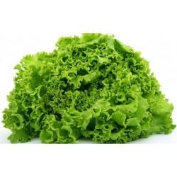 Sementes de salada de...