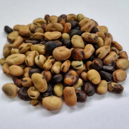 Sweet Lorane fava beans seeds