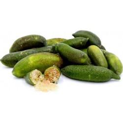 Prstenasta Limeta Seme - Finger Lime