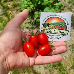 Семена томатов Datterino -...