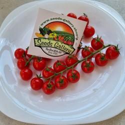 BLUMAUER Vine Cherry Tomato...