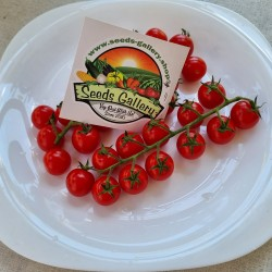 Семена помидоров черри...
