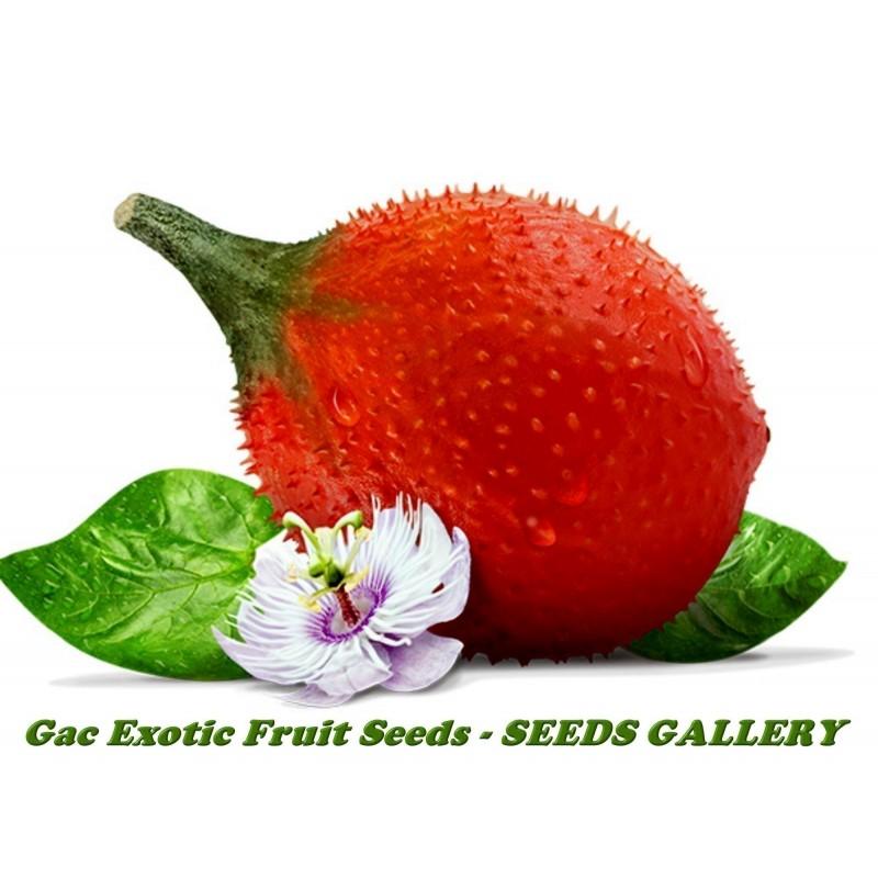 Gacfrucht, Gac Fruit, Baby Jackfrucht Samen