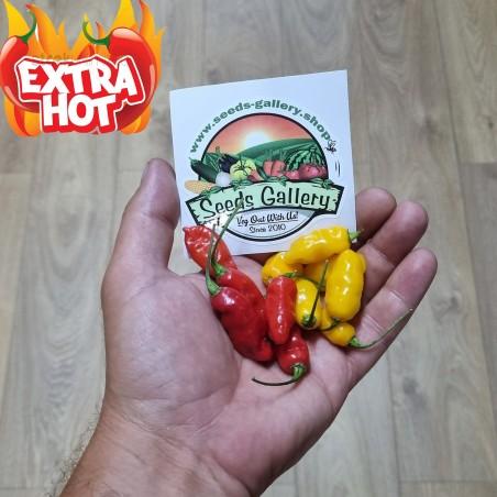 Dragon fire chili peper zaden