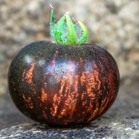 Koningin Van De Nacht Tomatenzaden