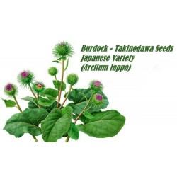 Σπόροι λάππα TAKINOGAWA (Arctium lappa)