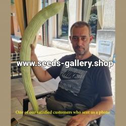 Graines de concombre Arménien
