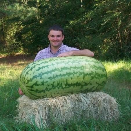 Riesenwassermelone Samen