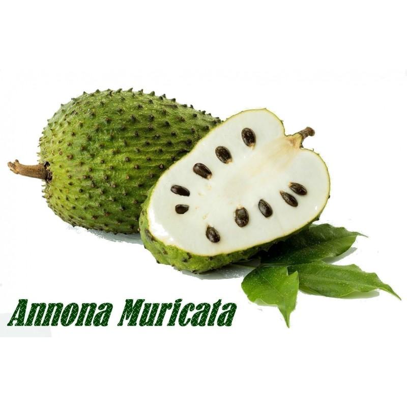 Graviola - Soursop Seeds (Annona muricata)