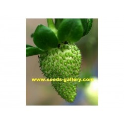 Green strawberry seeds
