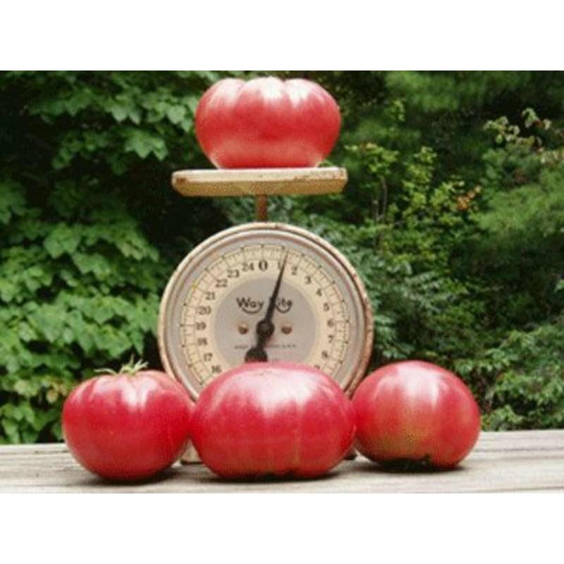 Beefsteak Heirloom Tomato Seeds