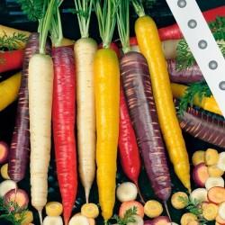 Sementes de Cenoura Rainbow mix