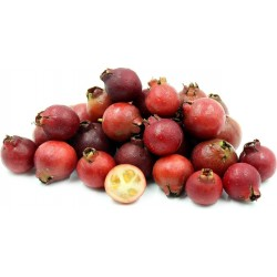 Erdbeer-Guave Samen