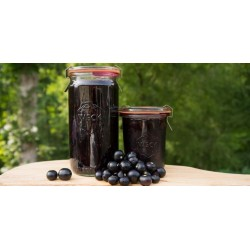 Wonderberry Samen