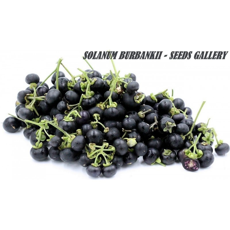Wonderberry Sunberry Seeds