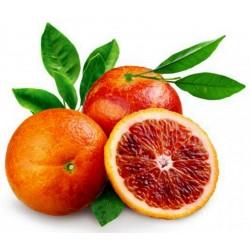 "Blutorange Samen ""Moro Blood Orange"""