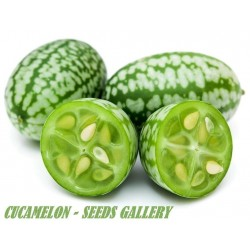 Cucamelon seeds - Mexican Sour Gherkin Cucumber