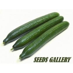 Cucumber Seeds 'Sensation'