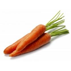 Danvers 126 Karottensamen