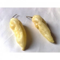 """Fatalii White"" Chili Seeds"