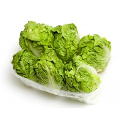 Great Lakes 118 Lettuce Seed