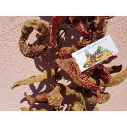 "Sementes Pimenta ""Vezanka"" Antigo variedade sérvio"