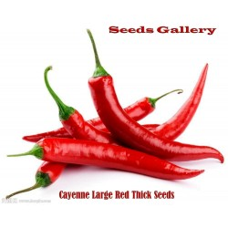Cayenne Large Red Thick Samen