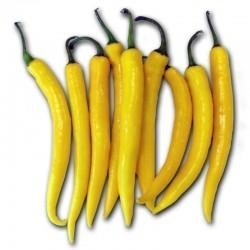 Chili Seme 'Golden Cayenne'