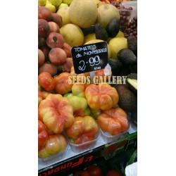 Seme paradajza Montserrat