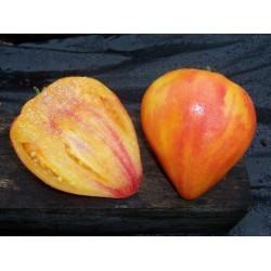 Orange Russian Tomato Seeds