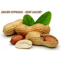 Peanut Seeds (Arachis Hypogaea)