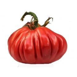 Pink Accordion Tomato Seeds
