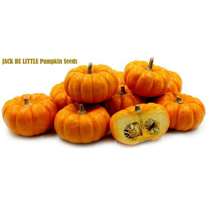 Pumpkin JACK BE LITTLE seeds