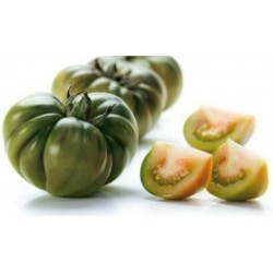 Raf Tomaten Samen