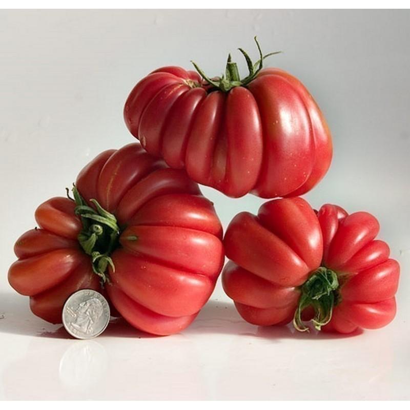 Graines De Tomate Indiens ZAPOTEC Ribbed