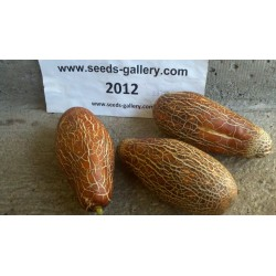 Sikkim Cucumber Seeds