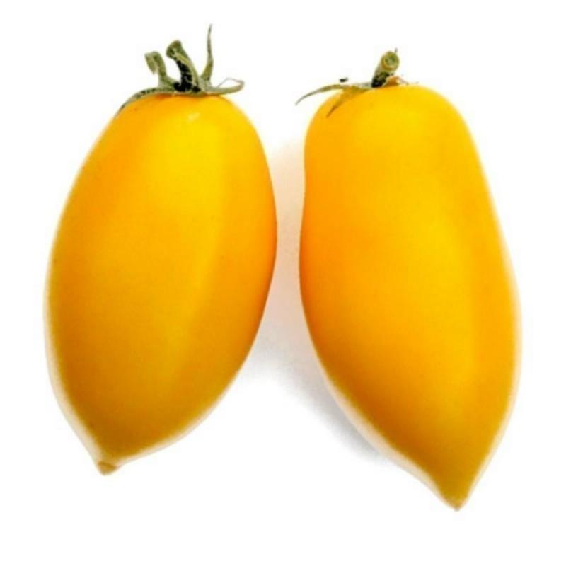 Sementes de Tomate ROMAN CANDLE